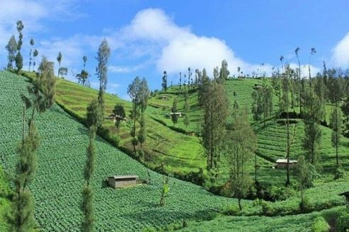 Lokasi dan Jalan Menuju Desa Ngadas Malang, Desa Tertinggi di Pulau Jawa dengan Sejarah Unik