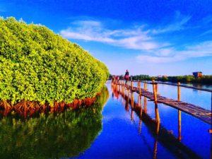 Lokasi dan Tiket Masuk Hutan Mangrove Pantai Congot, Kulon Progo Jogja Yang Mempesona