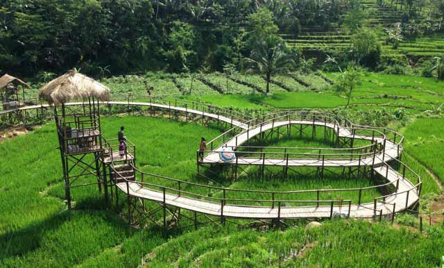 Lokasi Dan Harga Tiket Masuk Jembatan Cinta Purbalingga, Indahnya Jembatan di Tengah Sawah