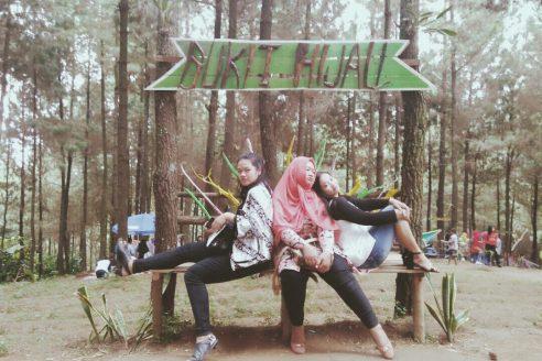 Lokasi dan Harga Tiket Masuk Bukit Pinus Wonosalam Jombang, Destinasi Wisata Asyik Dengan Sejuta Spot Foto Menarik